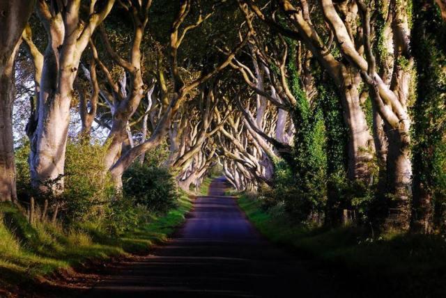 The Dark Hedges Ballymoney, Co. Antrim
